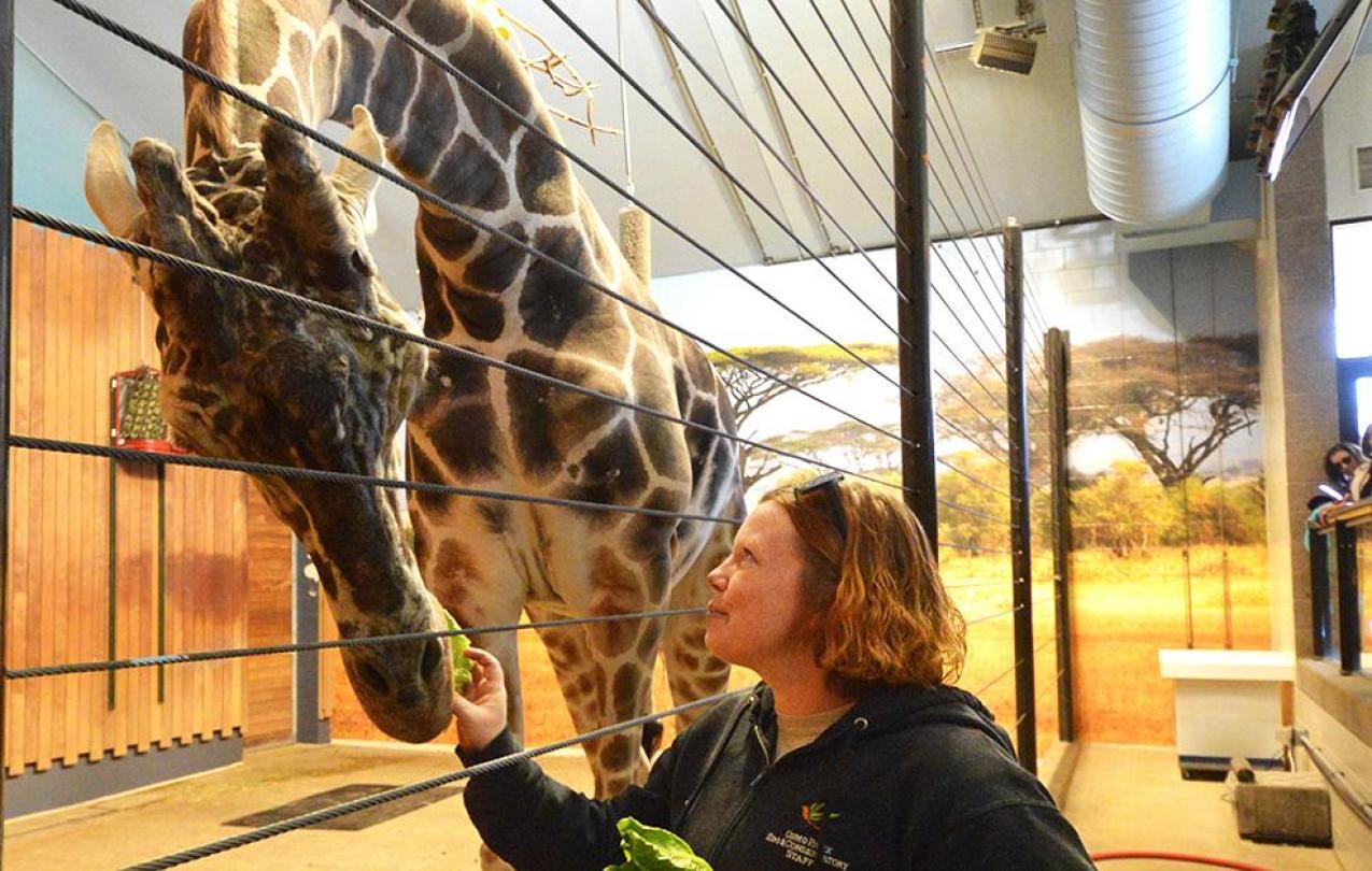 Jill feeds lettuce to Skeeter the giraffe.